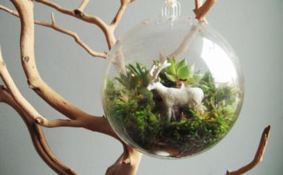 Tiểu cảnh terrarium theo phong cách