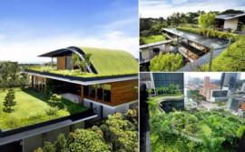 Trồng cây trên mái nhà - chống thấm ra sao?
